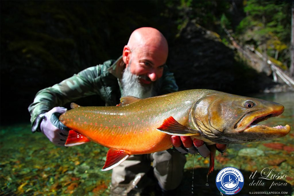 Awsome-Spawning-Bull-trout