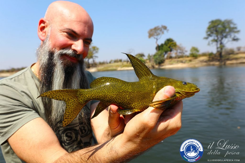 Catfish Squiker Poggi