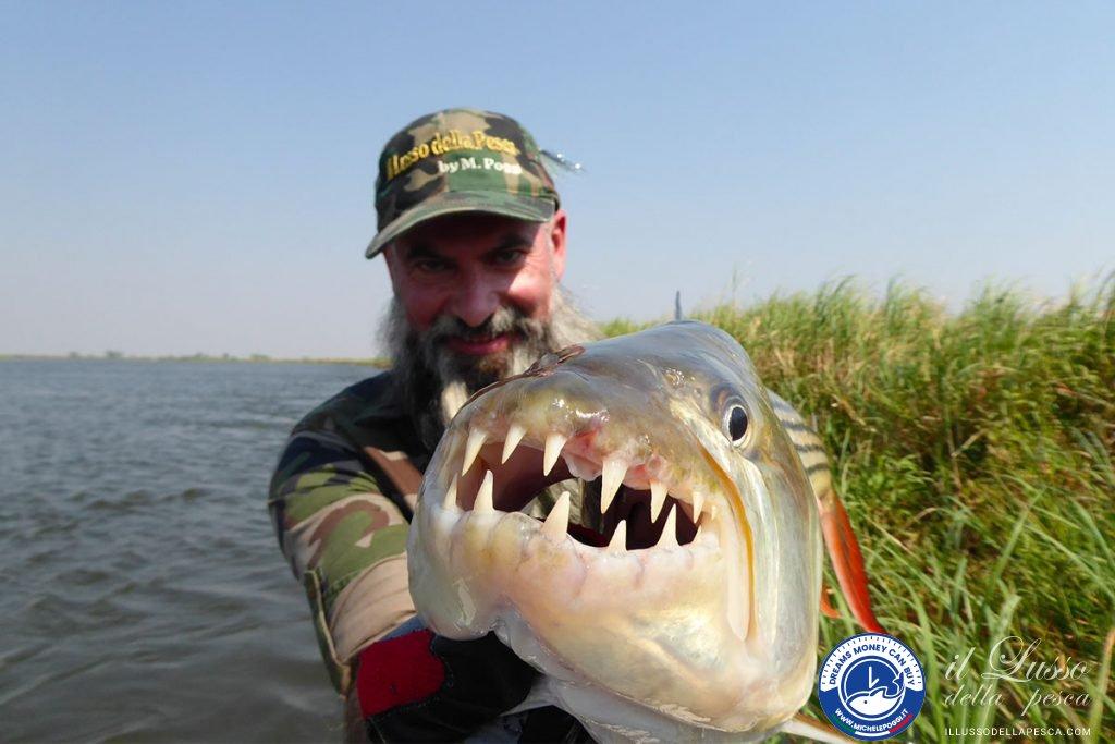 Tigerfish kiss Poggi Michele